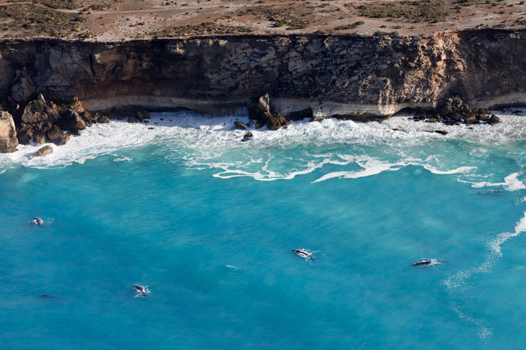 Whale Watching Scenic Flights